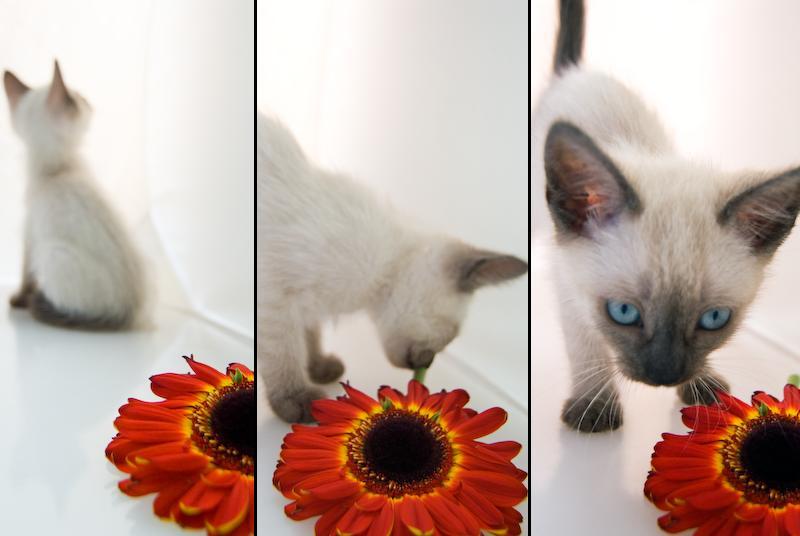 Luna's Flower Triptych