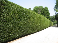 IMG_6704 (libbyrosof) Tags: longisland hedges