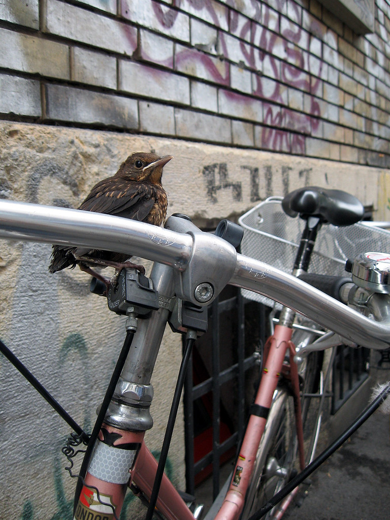 Baby Bird on Bike at Kelim