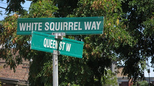 White Squirrel Way (for Joe Clark)