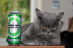 Refreshes the parts others cannot reach.JPG (Laura Whitehead) Tags: cat catwomen heineken weeman refreshment mog notserious britishblue ilovemypetsreally