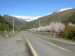 Camino en el Cajn del Maipo (elconejorojo) Tags: chile road ruta del carretera route estrada cajn maipo rodovia