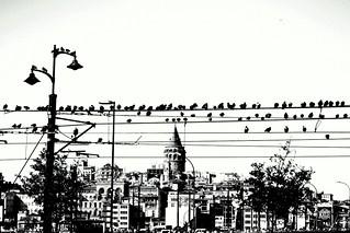 Yeni Cami'nin, güvercinleri
