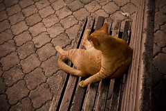 where is my soul mate? (hsalnat) Tags: cat orangecat singapore feline feralcat bedok straycat notmycat bedoksouth