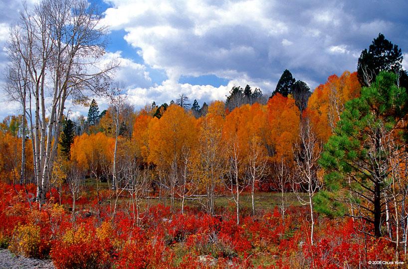 Aspens on Boulder Mountain, Highway 12, Utah