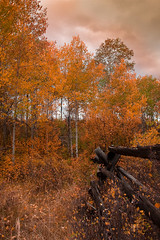 Fall in the Tetons (MarkNix) Tags: fall tetons grandtetonnationalpark absolutelystunningscapes