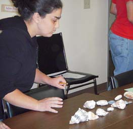 shells exercise