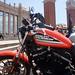 Harley 12