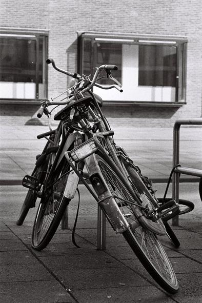 La vejez II (Amsterdam 2005)