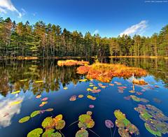 Forest pond (Vertorama) (Rob Orthen) Tags: trees sky reflection forest suomi finland landscape still pond nikon europe scenic rob tokina autumncolors explore scandinavia hdr maisema vesi metsä nuuksio syksy pinta d300 heijastus lampi photomatix 1116 explore1 orthen realistichdr lumpeet lakefinland theperfectphotographer vertorama pirttimäki roborthenphotography tokina1116 tokina1116mm28