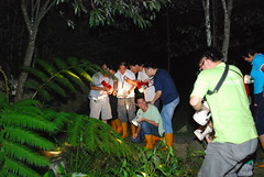 中國環團在桃米社區的綠屋民宿進行夜觀導覽,觀察豐富的蛙類生態