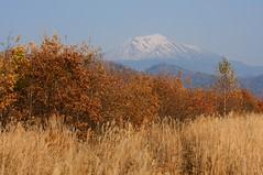 旭岳と枯葉とススキと