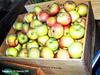 Fresh Apples (phil_sidenstricker) Tags: nature apples produce flickrmeet donotcopy valleyofthesunphoenixmetro upcoming:event=981998 southmountainfarmphoenixusa