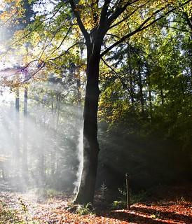 Zon en mist  gisteren in het bos..