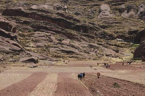Peruvian farmers.