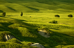 relaxinglight (raffaphoto©) Tags: trees green landscape james toscana cretesenesi naturesfinest supershot ysplix theunforgettablepictures