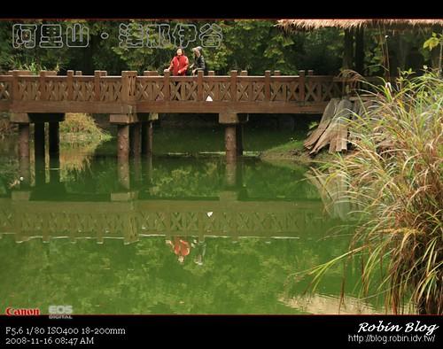 你拍攝的 20081116數位攝影_阿里山之旅133.jpg。