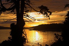 Tofino sunset 3 (moelynphotos) Tags: canada sol beach scenery britishcolumbia sunsets tranquility tofino naturalbeauty westcoast scenicview sunsetatthebeach romanticview montana2alaska natureenthusiast spectacularsunsetsandsunrises moelynphotos rainbowelite