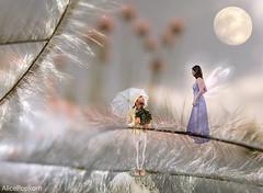 moonshine romance