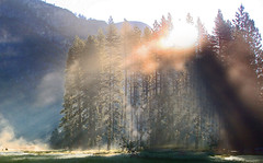 [フリー画像] 自然・風景, 樹木, 日光・太陽光線, ヨセミテ国立公園, 世界遺産, アメリカ合衆国, カリフォルニア州, 201106160100