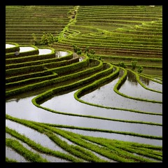 terrace rice fields (*jos*) Tags: travel bali canon indonesia landscapes asia 5d oriente orient terra ricefields viaggi paesaggi riso risaie 500x500 canoniani proudshopper 240x240 beautifulbali winner500 exceptionallybeautifulbaligallery