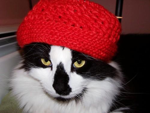 Amanda Hat 1