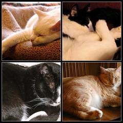 "Happy Furry Friday from Gail and Sid and ""The Boys"" (Gail S) Tags: cats fdsflickrtoys happyfurryfriday catsandwindows"