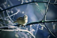 (Lee_Bryan) Tags: newyork bird nature canon eos centralpark wildlife 400d theperfectphotographer