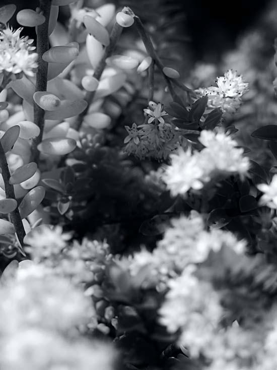 Photography - Dark Pods by Nicholas M Vivian