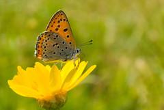Welcoming the spring (A. Saleh) Tags: lebanon flower macro yellow closeup butterfly nikon d200 saleh naturesfinest batroun asaad baakleen nikon1855mm anawesomeshot impressedbeauty diamondclassphotographer flickrdiamond catchingzlight wwwasaadsalehcom msaylha