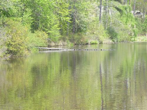 Wake County Crowder District Park 037