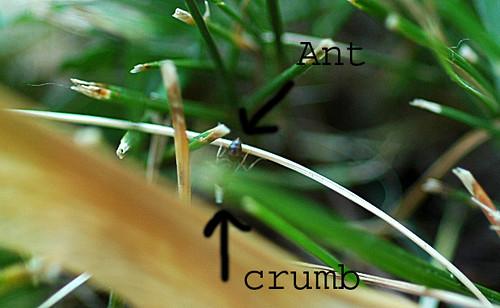 06/01/08 my little ant friend