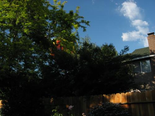 garden shots June 08 022