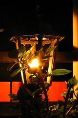 Evening mood on my balcony (paprtala) Tags: lamp evening abend lampe balcony balkon abendstimmung geleuchte