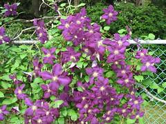 Mystery Flowers 3