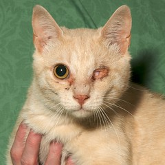 Easy (brsaunders) Tags: rescue pet eye cat rochester abuse adoption