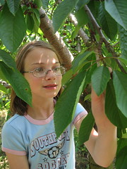 Megan picking cherries