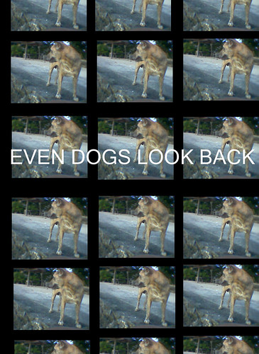 Images of One Dog