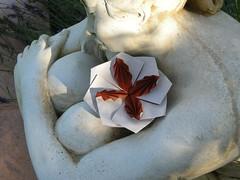 4-leaves tato-box