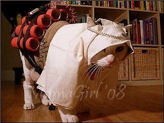 suicide bomber-cat