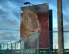 Big Bunneh is Watching You!