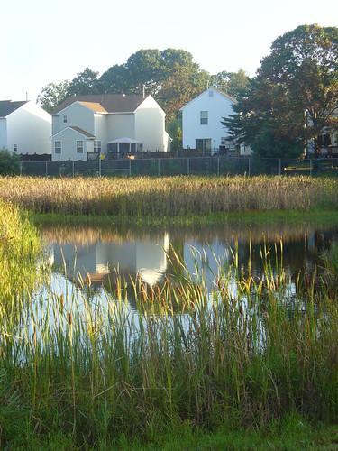 Pond - After