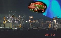 Pig - 豬 (Pierre♪ à ♪VanCouver) Tags: rogerwaters darksideofthemoon rockconcert rockandroll musician vancouver sofarsocute pinkfloyd pig 豬