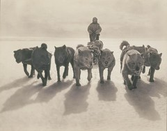 Huskies pulling sledge (State Library of New South Wales collection) Tags: shadow bw dog mist snow cold cute ice expedition animals sepia race team husky shadows power 8 antarctica huskies arctic pack gloves harness musher sled exploration sleigh 1914 eight tinted loyal sledge 1911 sleddogs sledges silvergelatin hoodedjacket canidaslitta statelibraryofnewsouthwales coldnoses leadlines 19111914 frankhurley sledehonden whitescene sledcover sleightmandogs poolhonden fanhitch onehidingattheback firstaustralasianantarcticexpedition commons:event=commonground2009