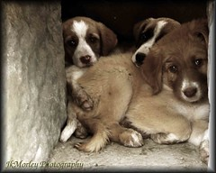 Wild and abandoned puppies in Ancient Ruins - Altisys,Turkey. (J.K Morley | Photography) Tags: cute dogs animals turkey happy eyes furry ancient puppies ruins adorable paws scared hiding turkish togeather
