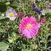 Ghazni Flowers