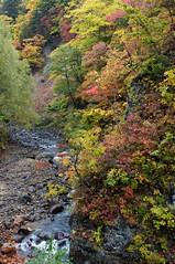 白井川と紅葉
