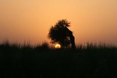 "sunset (TARIQ HAMEED SULEMANI) Tags: pakistan sunset sensational punjab 1001nights tariq sceneries artcafe blueribbonwinner digitalcameraclub flickrsbest panjnad abigfave anawesomeshot ""isawyoufirst"" concordians excapture sulemani goldstaraward punjnad damniwishidtakenthat llovemypics flickrlovers panoramafotográfico artcafedomidoexhibitionscomein"
