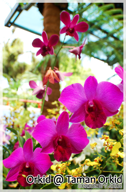 orkid1c