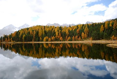 Indian Summer 2008-55 (ND Strupler) Tags: trees sky mountains reflection fall nature colors grass clouds switzerland lakes hills pure indiansummer maloja stmoriz